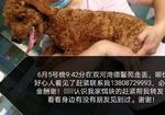 寻狗启示免费发布平台,棕色泰迪