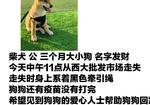 寻狗启示免费发布平台,寻找狗狗 酬谢1000元