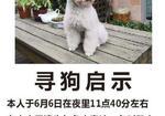 寻狗启示免费发布平台,在姑苏区的宝石御景园丢失了一条灰泰迪