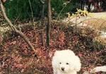 寻狗启示免费发布平台,济南舜玉南区附近丢了一只狗狗
