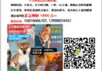 寻狗启示免费发布平台,万元重金寻豆柴弟弟