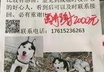 寻狗启示免费发布平台,找狗!找狗!