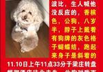 寻狗启示免费发布平台,重金寻找泰迪狗狗