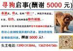 寻狗启示免费发布平台,5000元寻找爱女泰迪初二
