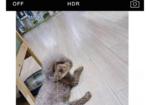 寻狗启示免费发布平台,寻找爱犬灰色泰迪