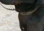 寻狗启示免费发布平台,寻狗启示   联系方式15281918826