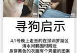 寻狗启示免费发布平台,  深圳罗湖区清水河鹤围村寻找爱犬