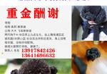 寻狗启示免费发布平台,杨浦长白新村丢失黑泰迪两只