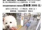 寻狗启示免费发布平台,白色贵宾10斤 腿不是很长