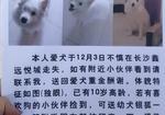 寻狗启示免费发布平台,寻狗
