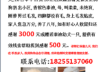 寻狗启示免费发布平台,合肥习友路太阳海岸花园酬谢三千元寻找泰迪