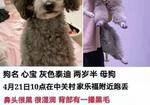 寻狗启示免费发布平台,2021年4月21日 上午十点 爱犬走失