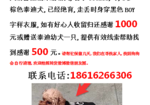 寻狗启示免费发布平台, 上海松江区名人府邸寻找泰迪