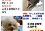 寻狗启示免费发布平台,大井头碧桂园门口