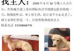 寻狗启示免费发布平台,帮狗找主人