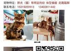 寻狗启示免费发布平台,东营寻猫