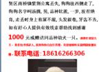 寻狗启示免费发布平台,上海奉贤区南桥镇紫荆公寓寻找比熊