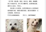寻狗启示免费发布平台,奖励一万元寻狗