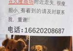 寻狗启示免费发布平台,北京久隆商场附近寻找14岁狗狗