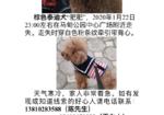 寻狗启示免费发布平台,寻找泰迪狗