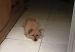 寻狗启示免费发布平台,10年前抱回的流浪狗走失