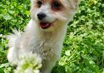 寻狗启示免费发布平台,簇桥水岸花园寻找小白狗