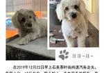 寻狗启示免费发布平台,寻白色狗万江石美走丢
