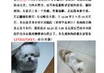 寻狗启示免费发布平台,寻找2020年12月24日早晨在同福街与中山路口走失的杂交犬丢丢