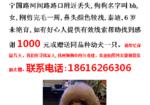 寻狗启示免费发布平台,上海杨浦区宁国路河间路寻找泰迪