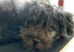 寻狗启示免费发布平台,我的爱犬丢失,狗狗名字叫小黑