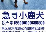 寻狗启示免费发布平台,急寻黑金小鹿犬