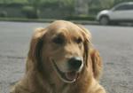 寻狗启示免费发布平台,紧急寻狗