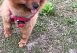 寻狗启示免费发布平台,请捡到狗狗的好心人联系我 谢谢