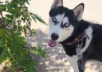 寻狗启示免费发布平台,寻求爱犬